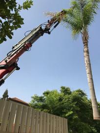 כריתת עצים בבית פרטי