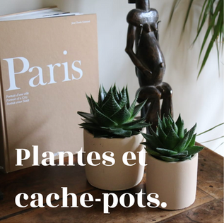 PLANTES ET CACHE-POTS.png