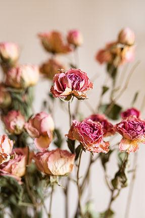 focus-roses-rose.jpg