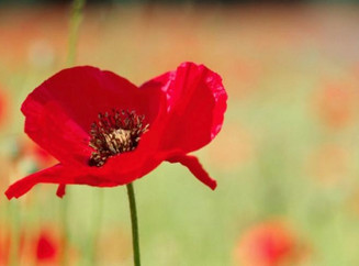 Are you planning a Remembrance Day event?