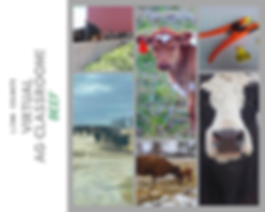 Virtual Ag classroom! Beef .png