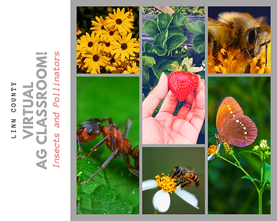 insects and pollinators.png