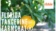 Growing Citrus in Florida