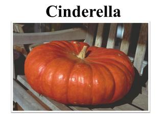 Pumpkin Pie vs Jack O' Lanterns!