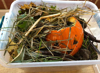 Compost Pumpkin