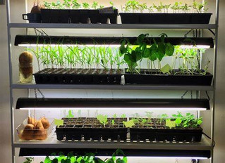 Growing Crops Indoors!