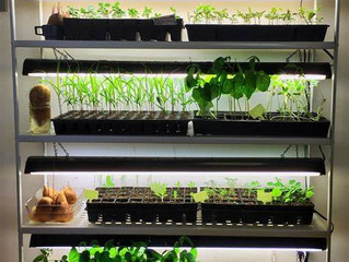 Growing Crops Indoors!