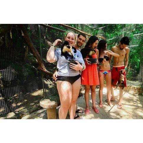 Friendly Monkeys