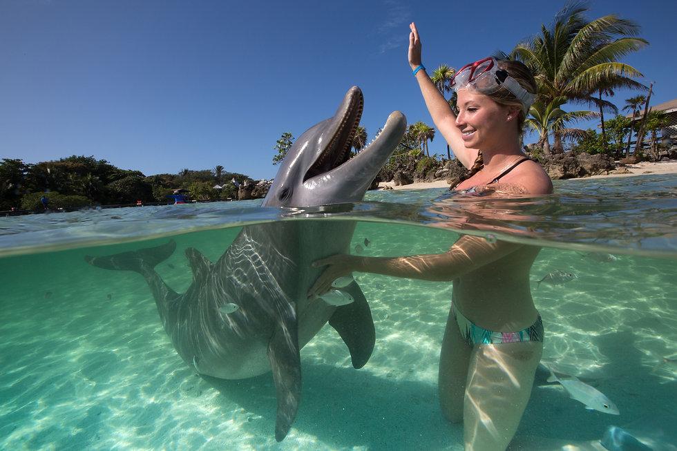 Dolphin Ecounter_1.jpg