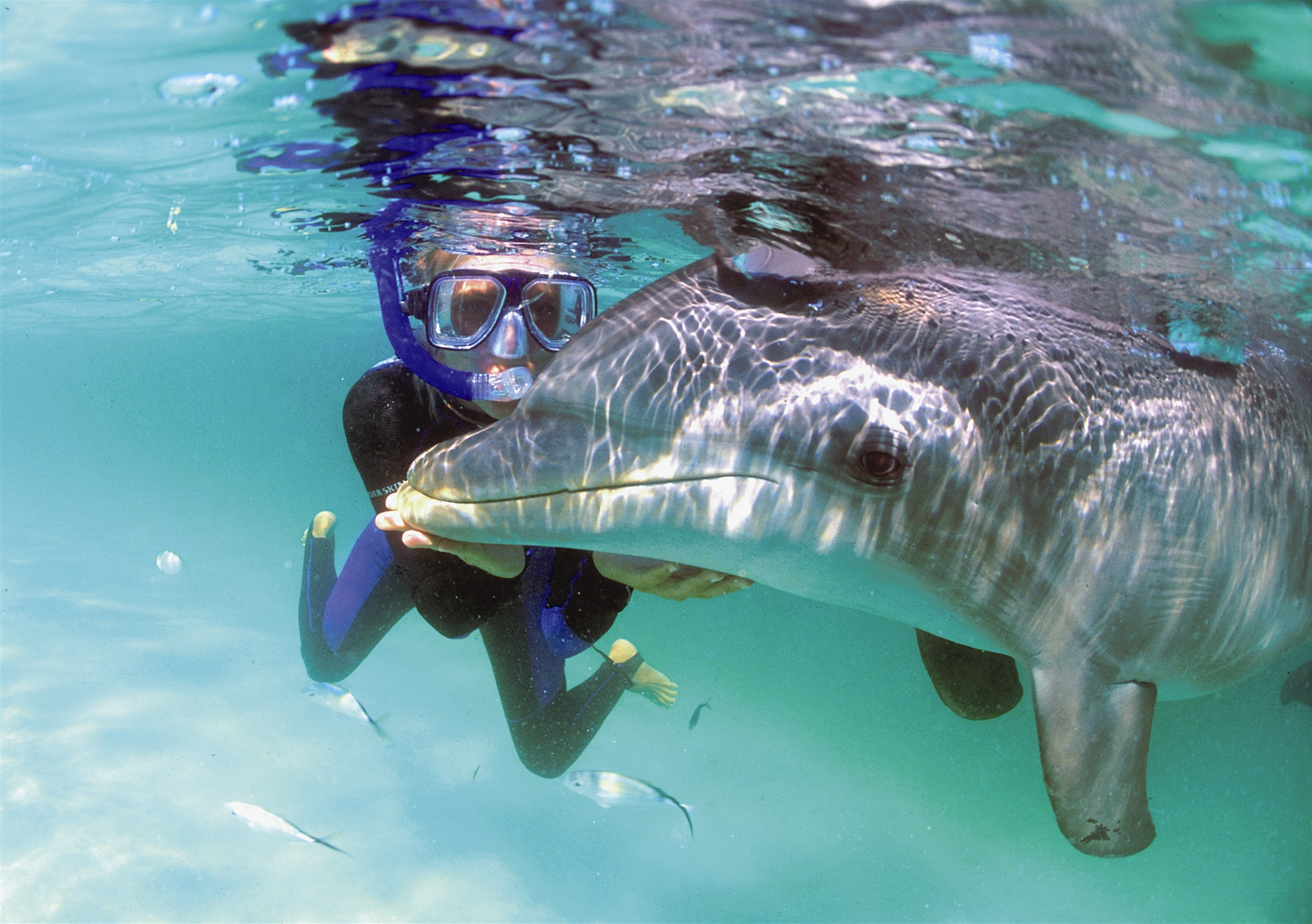 Dolphin Swim and Snorkel