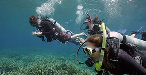 divers-3-students-ps.jpg