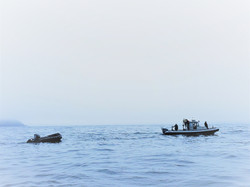 Burin-WhaleRescue