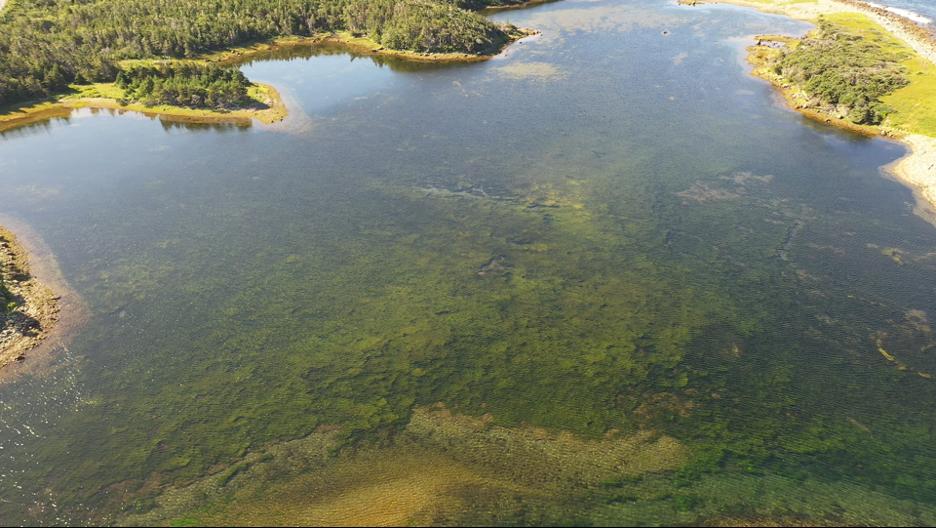 Great_Barasway_pond_eelgrass