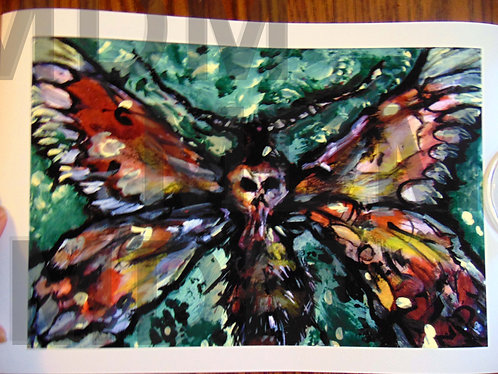 Deaths Head Moth Prints