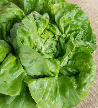 lettuce-andrea.jpg