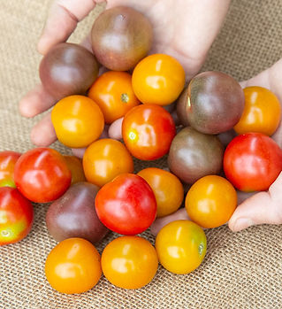 tomato-cherry-mix-1lb.jpg