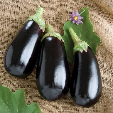 Eggplant, Nadia