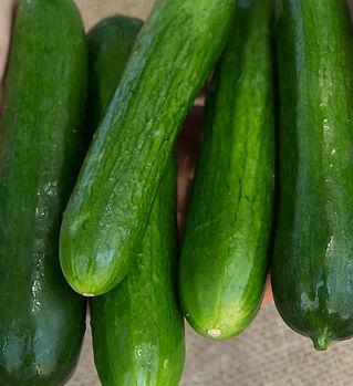 cucumbers-socrates-1lb.jpg