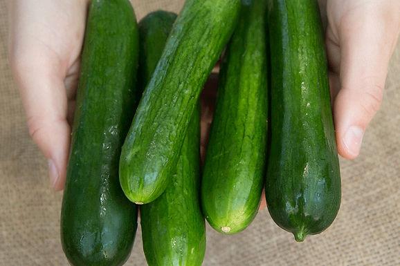 Cucumbers, Socrates