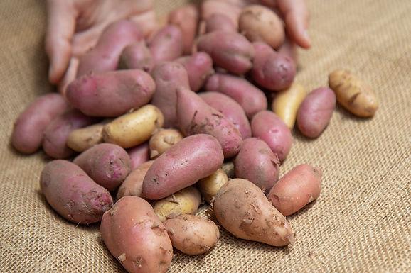 Potatoes, Fingerlings