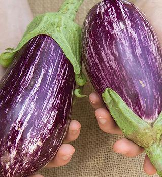 eggplant-nubia-1b.jpg