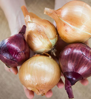onion-bulb-mix.jpg
