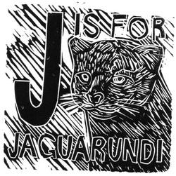 Jaguarundi
