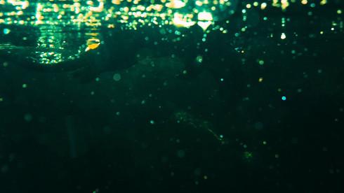 Víz alá bukó vidra, Zoo Barcelona
