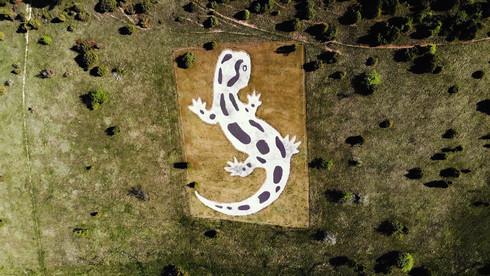 Az Aggteleki Nemzeti Park logója