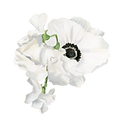 floral vector 2.png