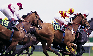 Horse-Racing-1410x600.png