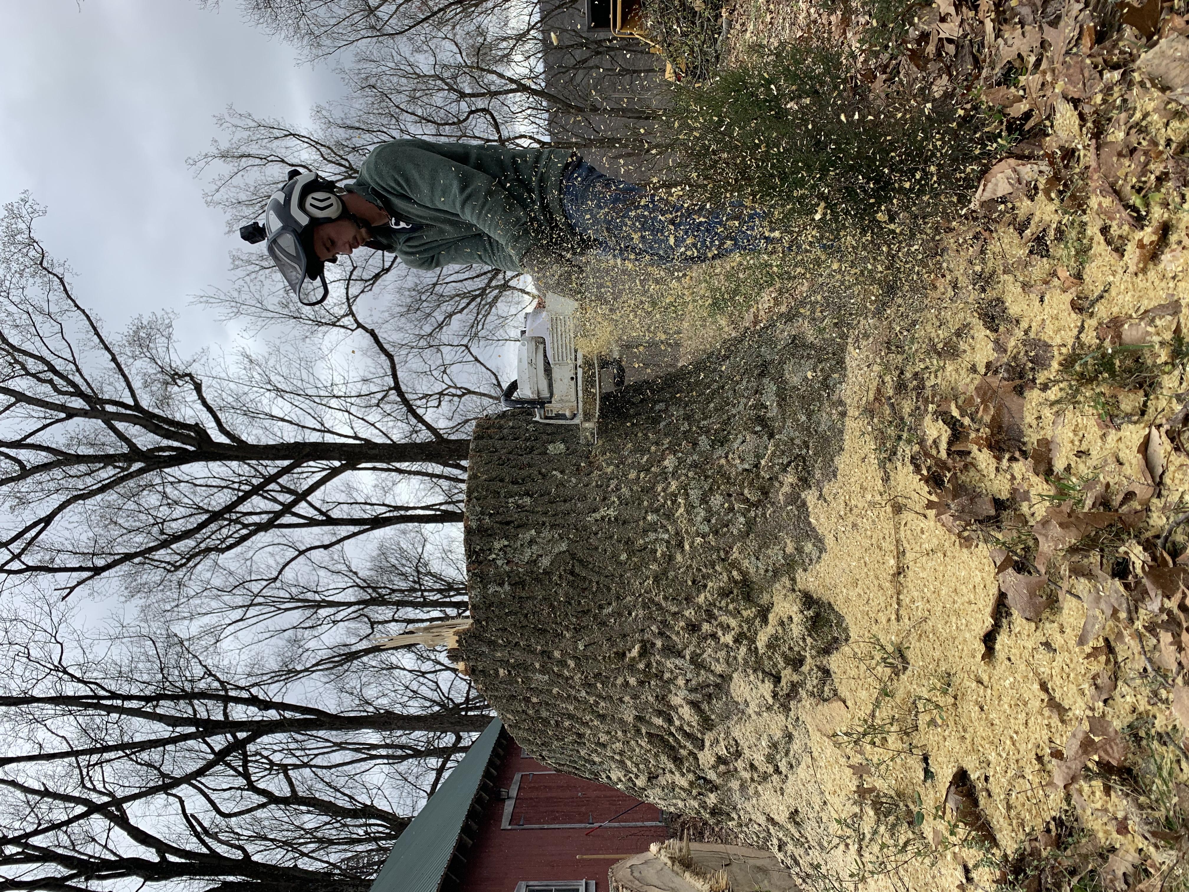 Stump cut