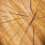 hout 5.jpg