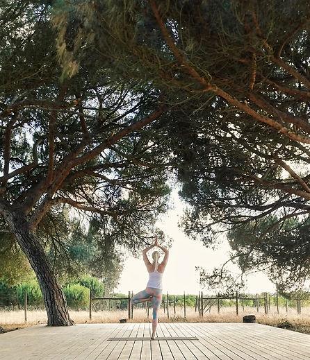 yogi1.jpg