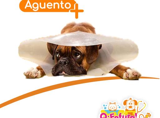 Seu cãozinho tem Dermatite Atópica?