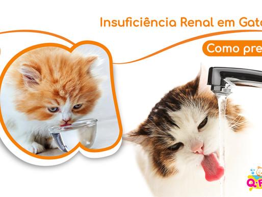 Insuficiência Renal em Gatos? Como Prevenir!