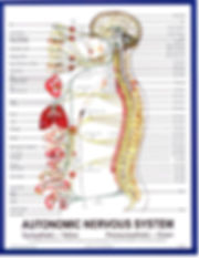 Neurology and Chiropractic