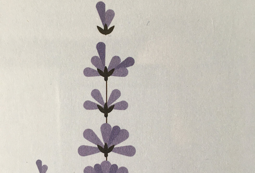 Lavender contemporary art print- Sally Caulwell