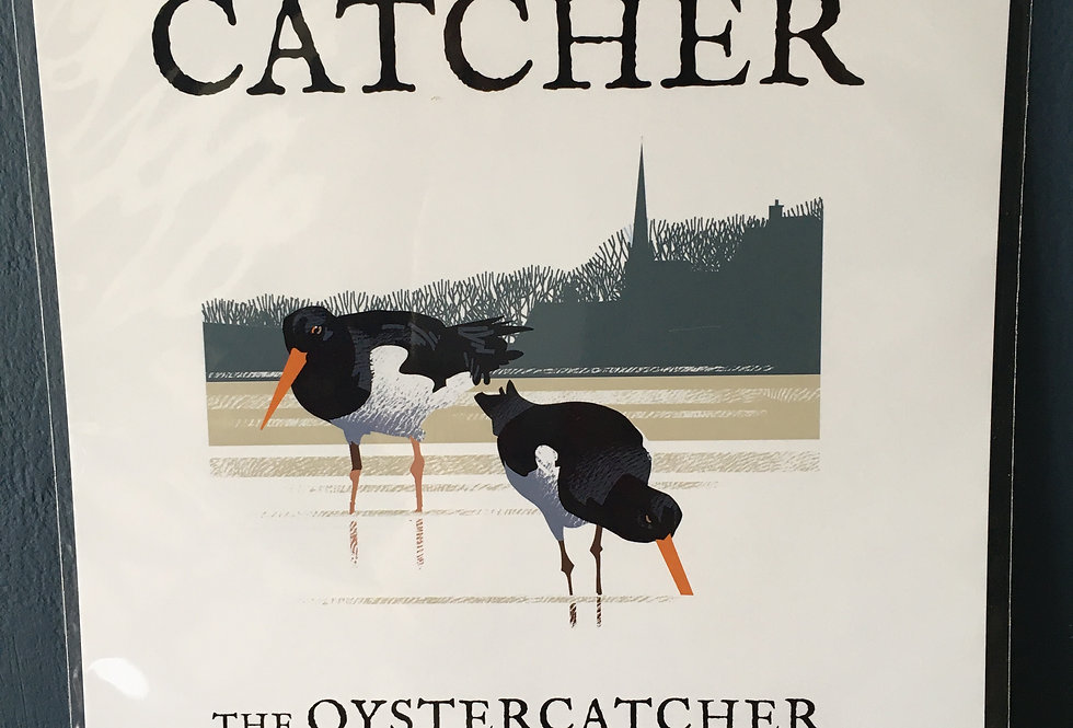 Birds of Ireland Series - Oyster Catcher