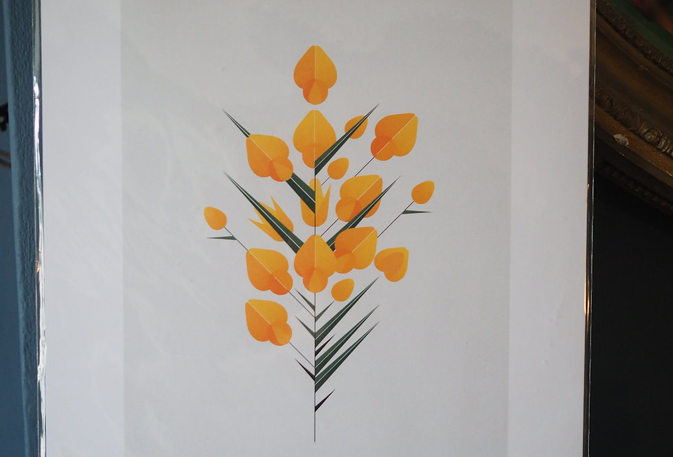 Contemporary Botanical A3 Print Gorse - Sally Caulwell