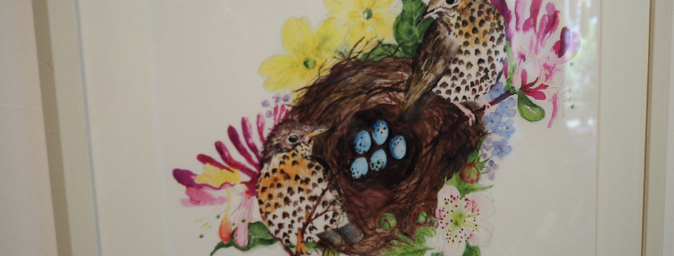 Nesting limited edition signed framed print- Louise Francis