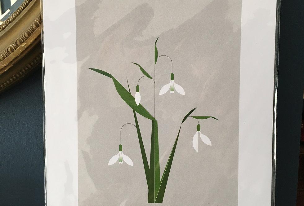 Snowdrop contemporary artprint- Sally Caulwell
