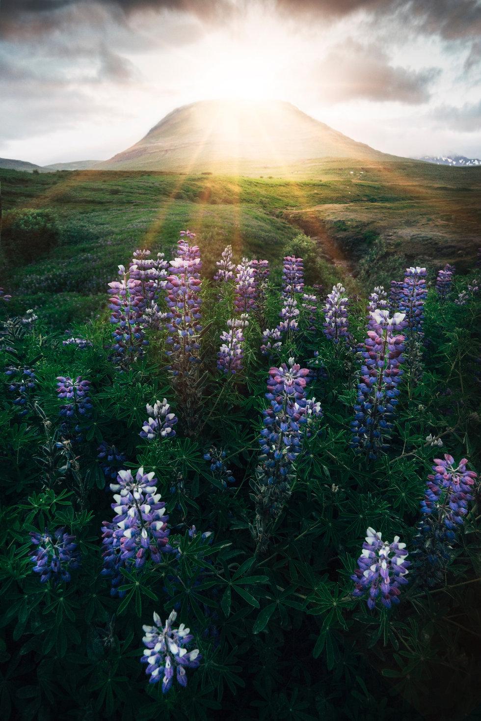 sun flowers nature - Photo by Štefan Štefančík on Unsplash.jpg
