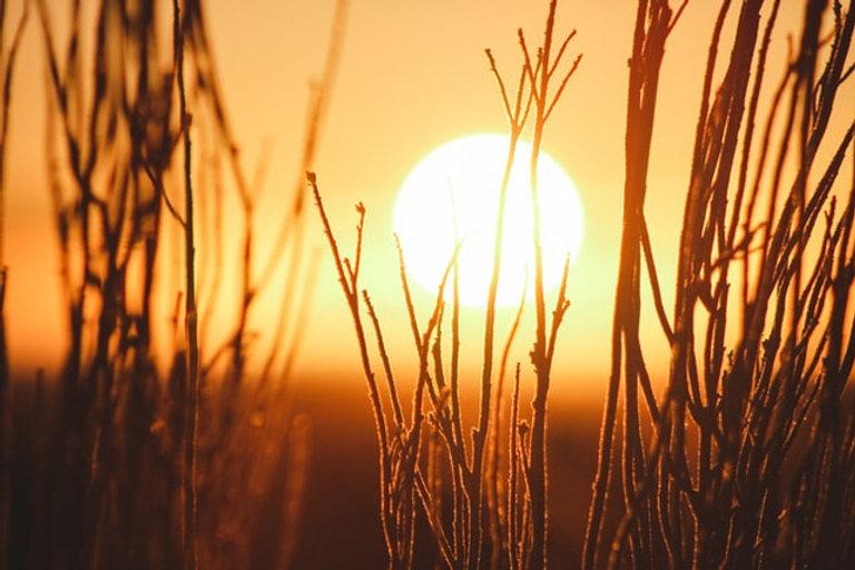 sun behind reeds Photo by Jeremy Bishop on Unsplash.jpg