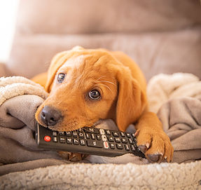 merlot chewing remote-1.jpg