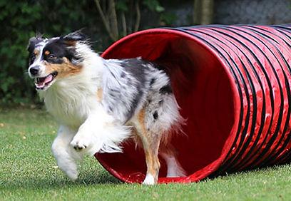 product-dog-agility-tunnels.jpg