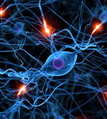 Níveis Neurológicos