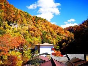 【横谷渓谷・紅葉情報⑤】秋、深まる!