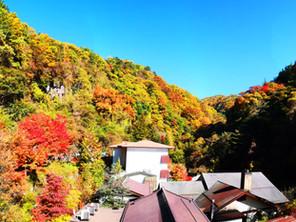 【横谷渓谷・紅葉情報④】10/25 紅葉真っ盛り!