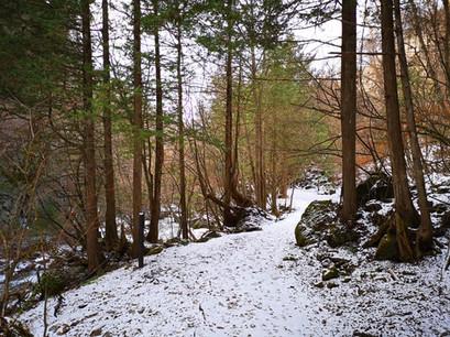 冬の横谷峡遊歩道